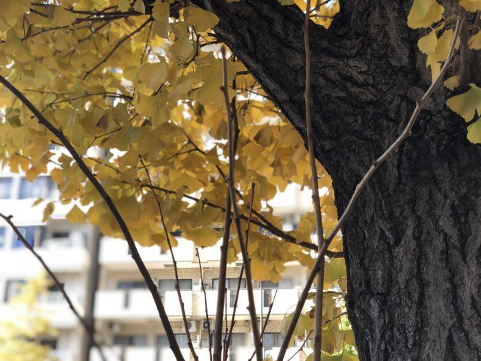 Lá vàng mùa thu